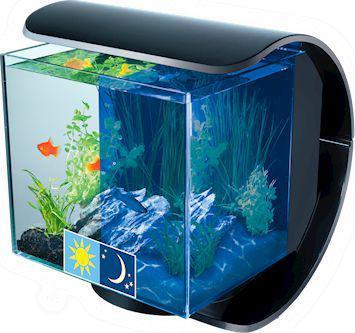 aquarium tetra