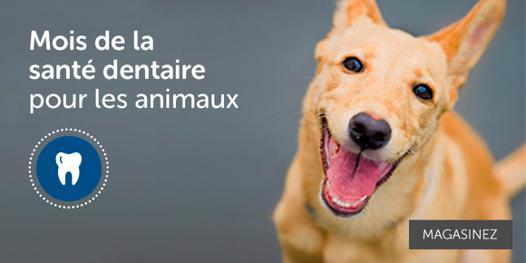 boutique en ligne animaux