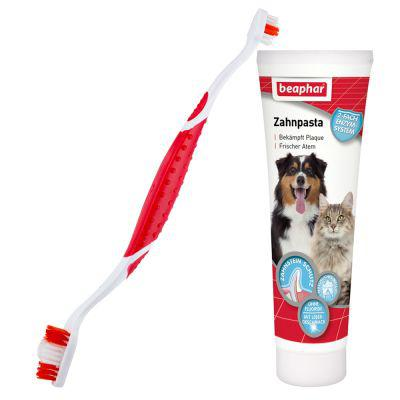 brosse a dent chien