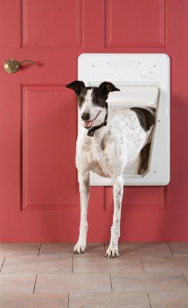 chatiere pour chien electronique