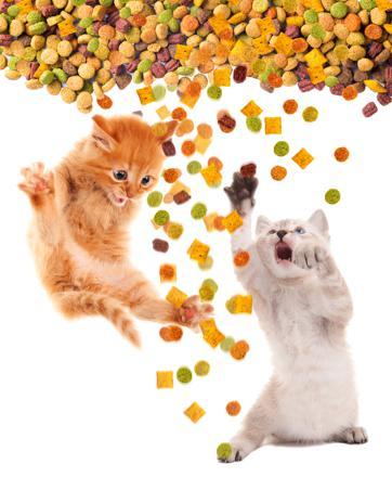nourriture chat