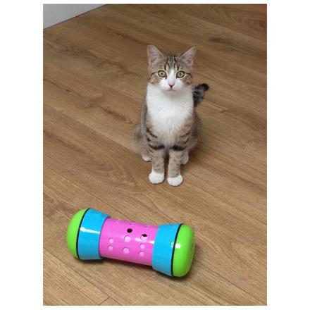 pipolino pour chat
